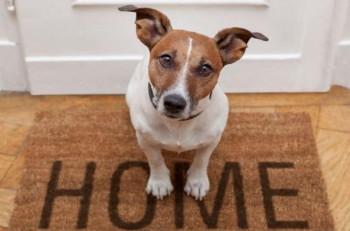 regolamentazione-animali-domestici